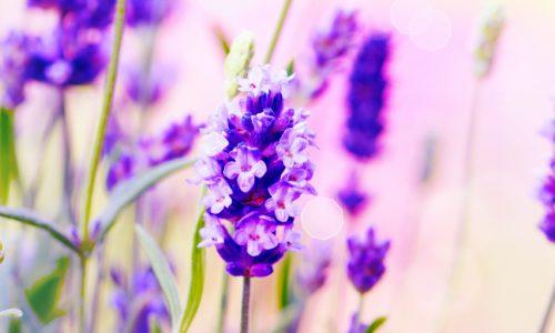 לימודי פרחי באך במכללת מעינות